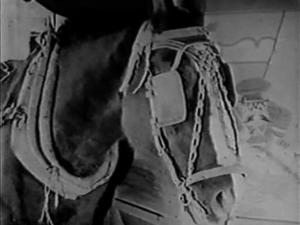 vlcsnap-2016-03-22-21h29m47s133